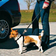 Lesă de mașină, pentru siguranța câinilor, 40-60 cm