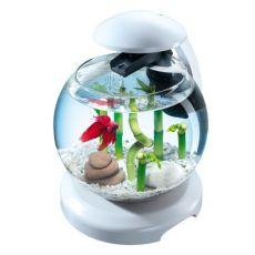 Acvariu pentru pești betta sau caracas - sferic 6,8 L