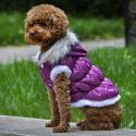 Jachetă pentru câine, cu glugă detaşabilă - mov, M