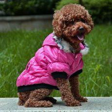 Jachetă pentru câine cu manşete negre - roz, S