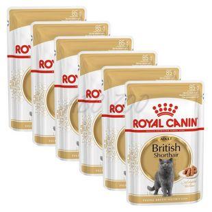 ROYAL CANIN British Shorthair pouch - 6 x 85g