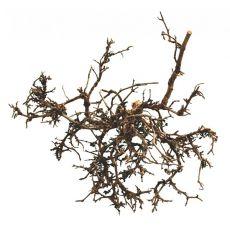 Decor terariu- arbust natural de deşert, 25 - 40m