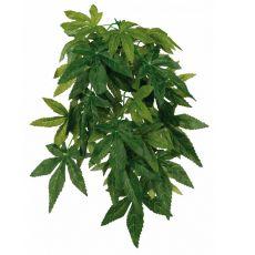 Plantă de terariu Abutilon - agăţabilă 20 x 50 cm