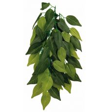 Plantă de terariu FIKUS - agăţabilă 20 x 30 cm