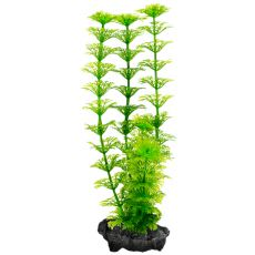 Plant Tetra Ambulia, S - 15cm