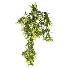 Plantă terariu Croton, 30 cm
