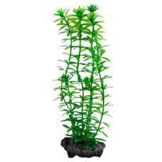 Egeria densa (Anacharis) - plantă Tetra 15 cm, S