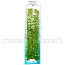 Limnophila sessiliflora (Ambulia) - plantă Tetra 38 cm