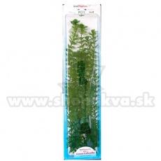 Cabomba Caroliniana (Green Cabomba) - plantă Tetra 38 cm, XL