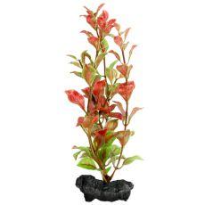 Ludwigia Repens (Red Ludwigia) - plantă Tetra 15 cm, S