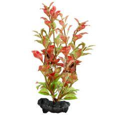 Ludwigia Repens (Red Ludwigia) - plantă Tetra 23 cm, M