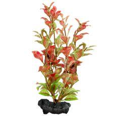 Ludwigia Repens (Red Ludwigia) - plantă Tetra 30 cm, L