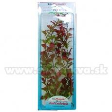 Ludwigia Repens (Red Ludwigia) - plantă Tetra 38 cm, XL