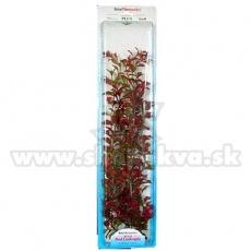 Ludwigia Repens (Red Ludwigia) - plantă Tetra 46 cm, XXL