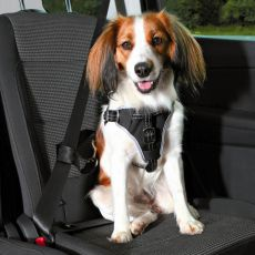 Centură de siguranță pentru câini  S/M