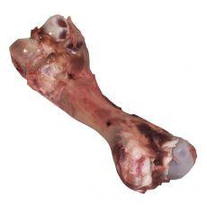 Maxi Bone Femur