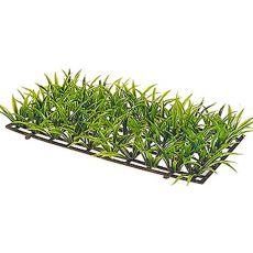 Sagitaria Platyphylla - növény Hobby nagyság 5 cm