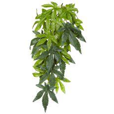 Abutilon Silk Small - plantă pentru terarium
