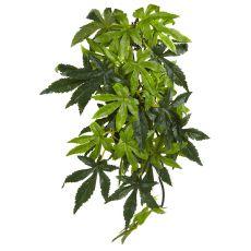 Abutilon Silk Medium - plantă pentru terarium