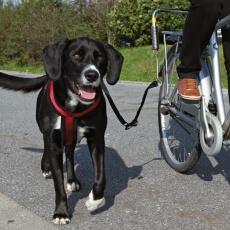 Set pentru a fixa câinii de biciclete