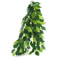 Ficus silk medium - plantă pentru terarium, 55cm