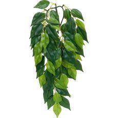 Ficus silk small - plantă pentru terarium, 45cm
